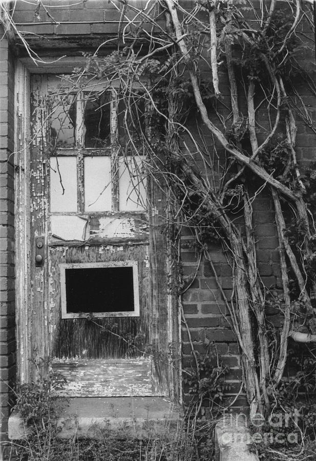 Doors Photograph - Door With Vines by Michelle OConnor