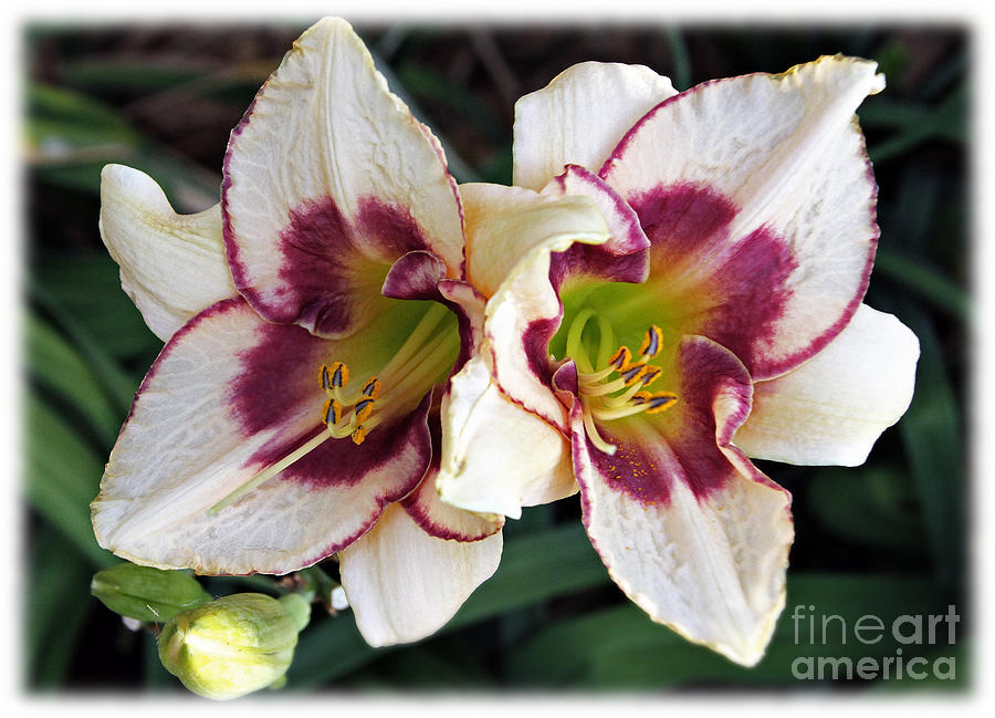 Double The Bloom Photograph  - Double The Bloom Fine Art Print