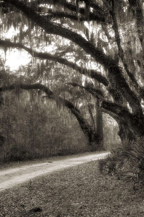 Dovers Bluff Sepia Photograph  - Dovers Bluff Sepia Fine Art Print