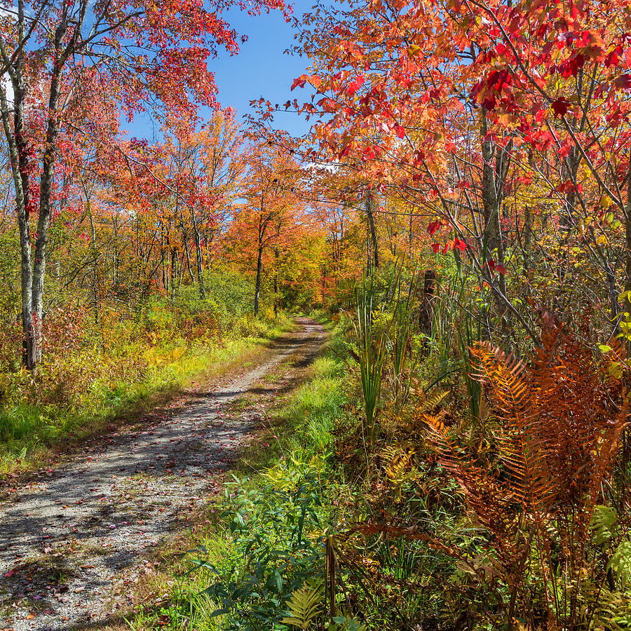 Down The Autumn Road Square Photograph  - Down The Autumn Road Square Fine Art Print