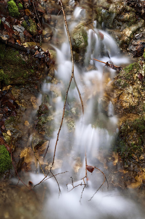 Down The Stream Of Illusion Photograph