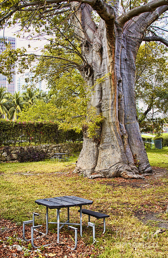 Downtown Old Tree Photograph  - Downtown Old Tree Fine Art Print
