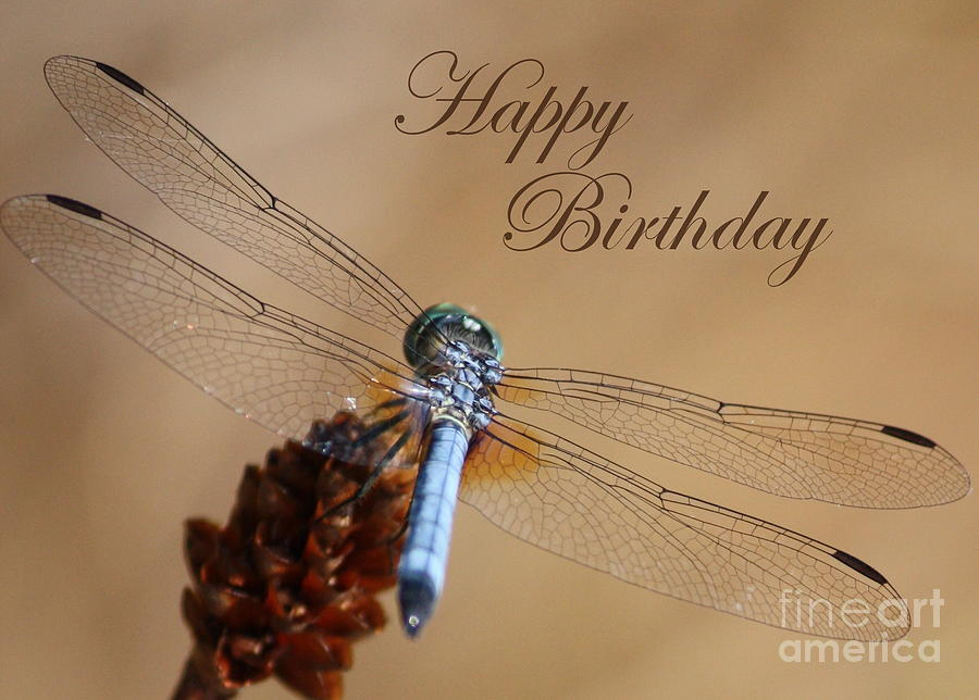 Dragonfly Birthday Card Photograph  - Dragonfly Birthday Card Fine Art Print