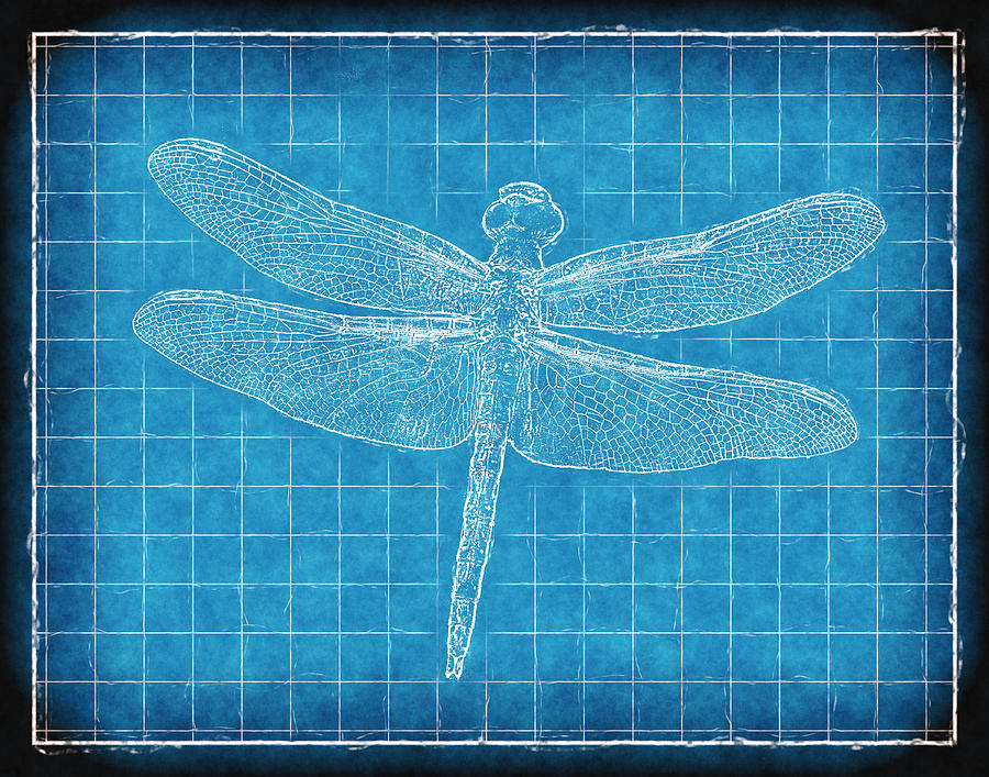 Dragonfly Blueprint Photograph  - Dragonfly Blueprint Fine Art Print