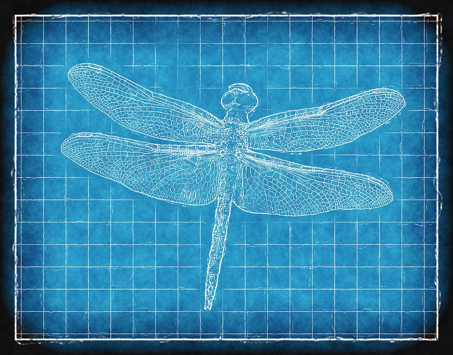 Dragonfly Blueprint Photograph
