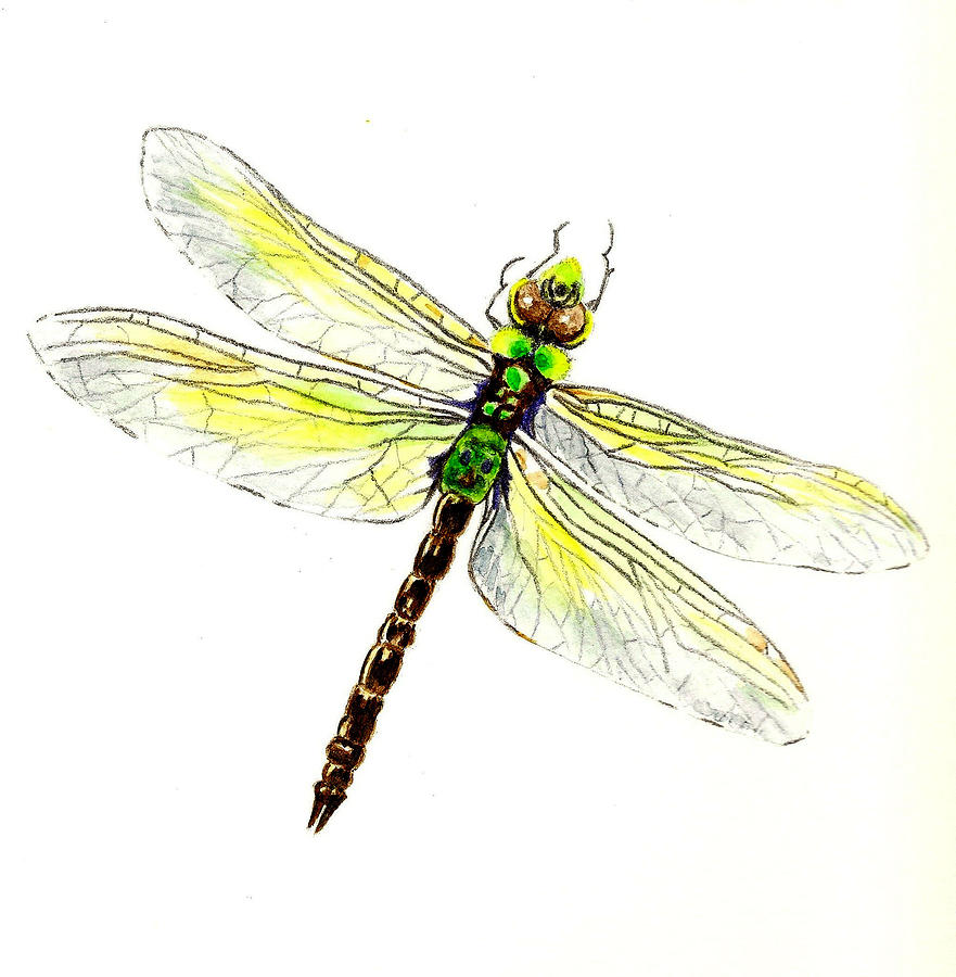 Dragonfly Painting By Michael Vigliotti