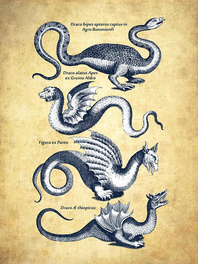 Dragons - Historiae Naturalis  - 1657 - Vintage Drawing