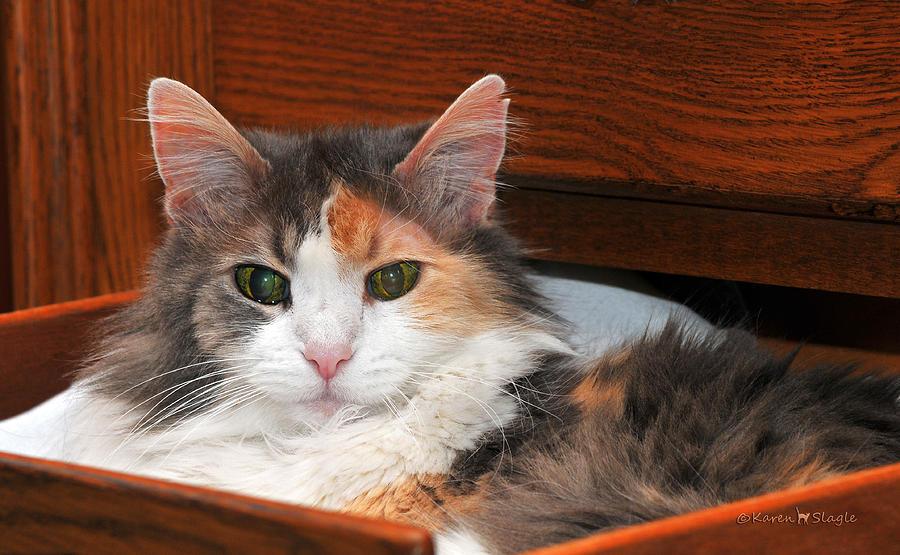 Drawer Kitty Photograph