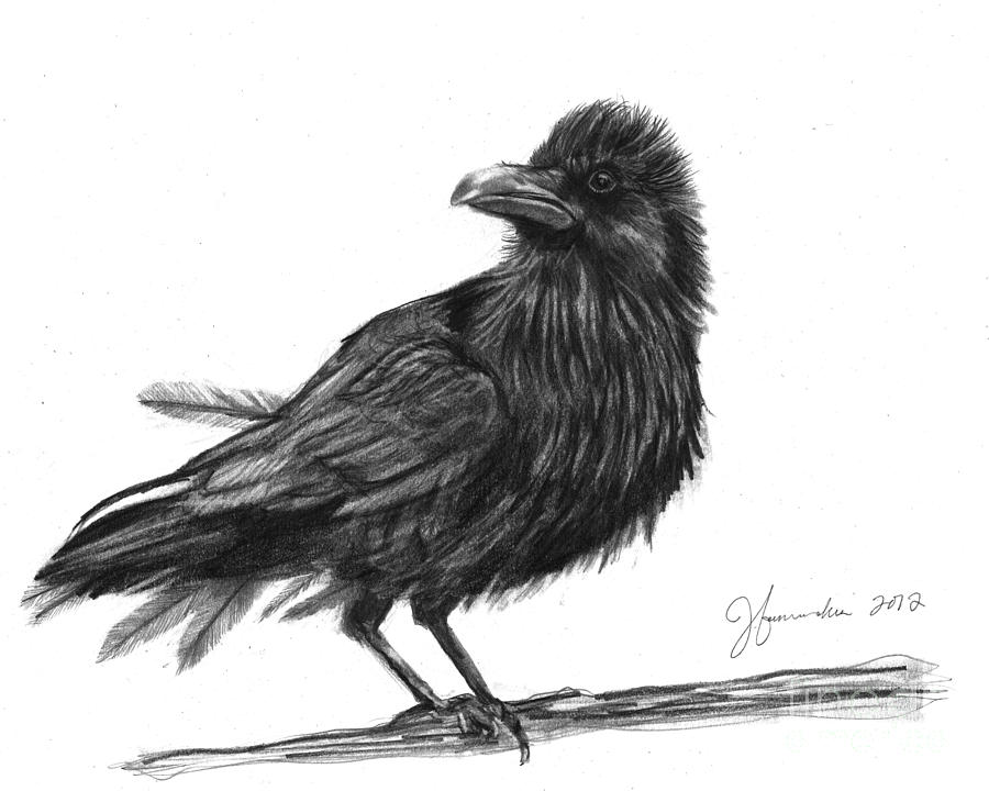 Dream Crow Drawing  - Dream Crow Fine Art Print
