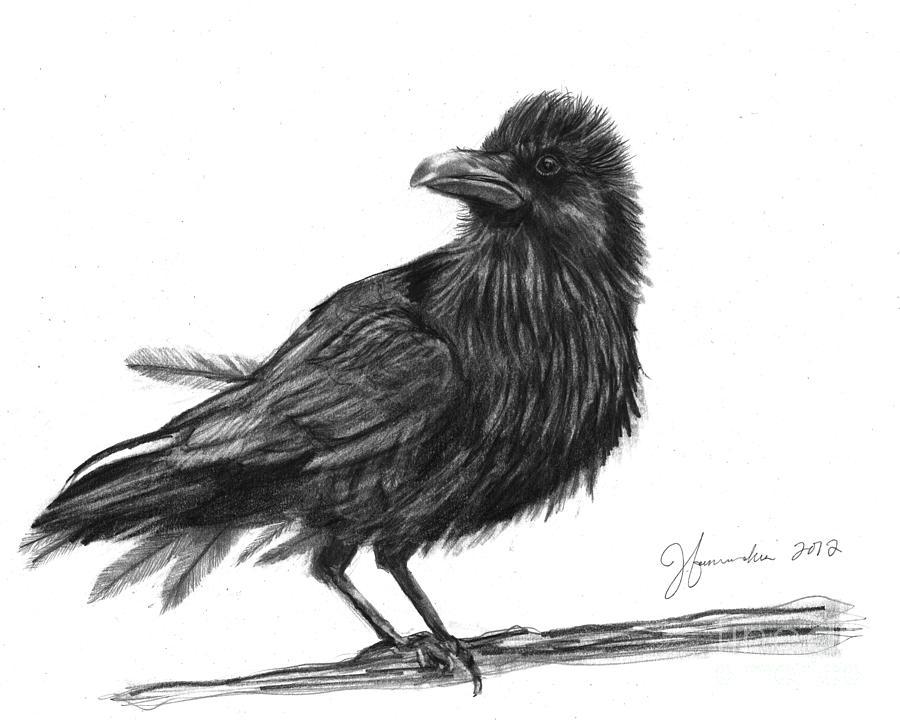 Dream Crow Drawing