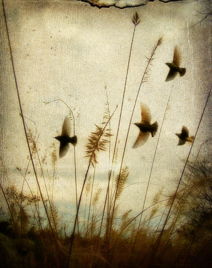 Dream Field Photograph  - Dream Field Fine Art Print