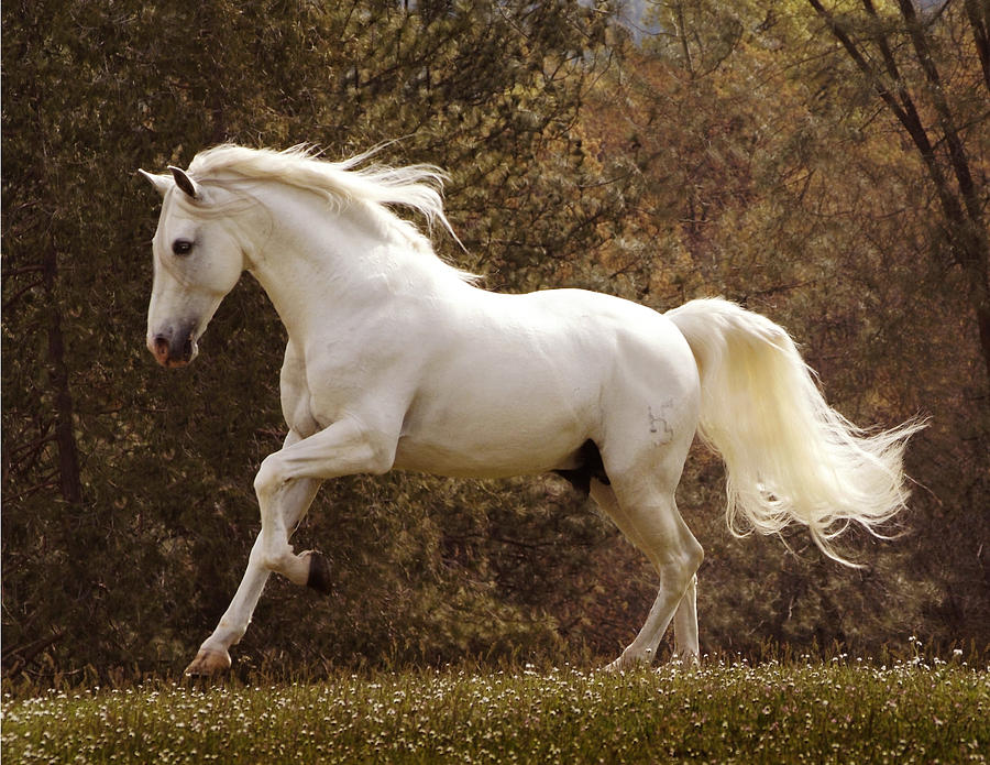 dream about a horse