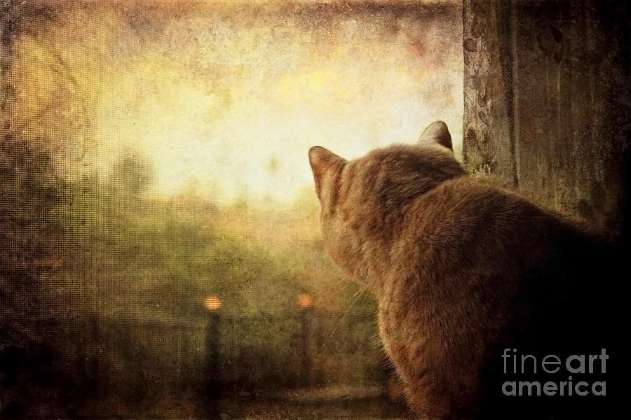 Cat Photograph - Dreamer by Ellen Cotton