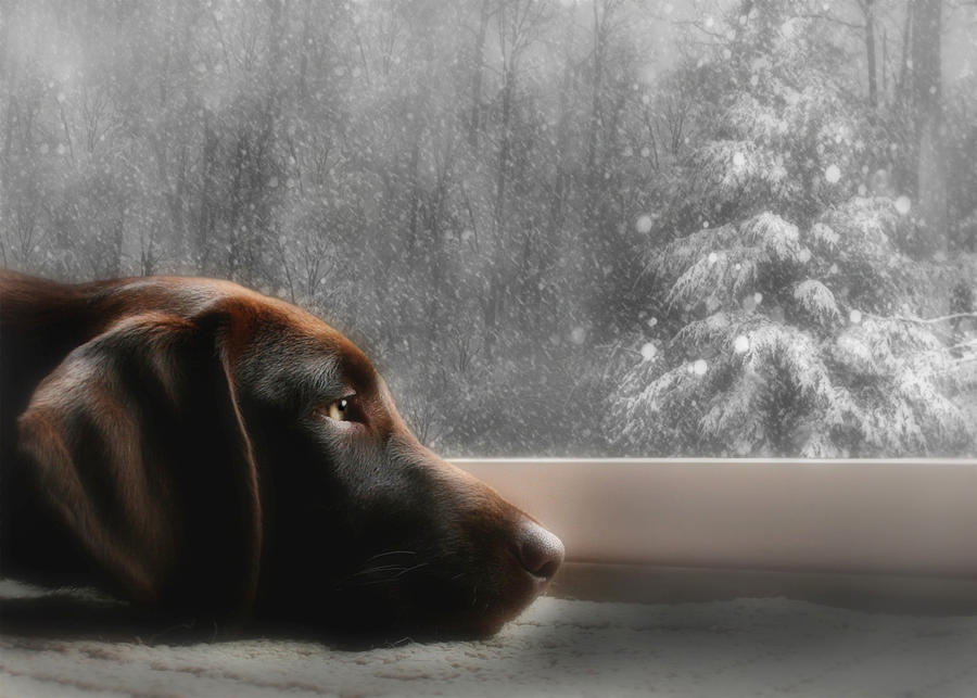 Dreamin Of A White Christmas Photograph