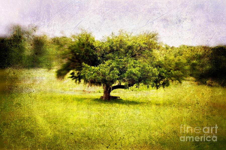 Tree Photograph - Dreamland by Scott Pellegrin