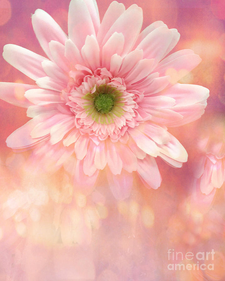 Dreamy Cottage Shabby Chic Pink Yellow Mango Gerber Daisy Flowers  Photograph
