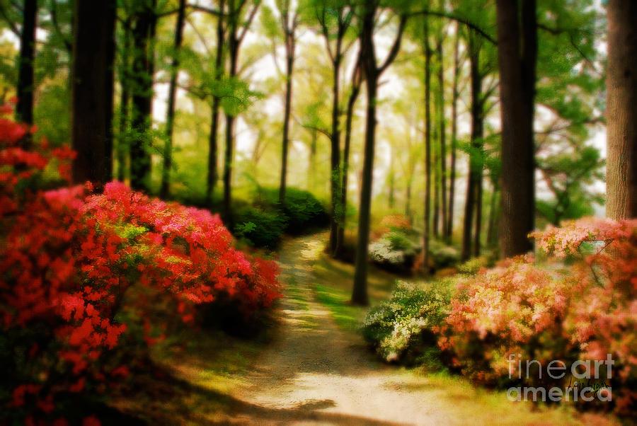 Landscape Photograph - Dreamy Path by Lois Bryan