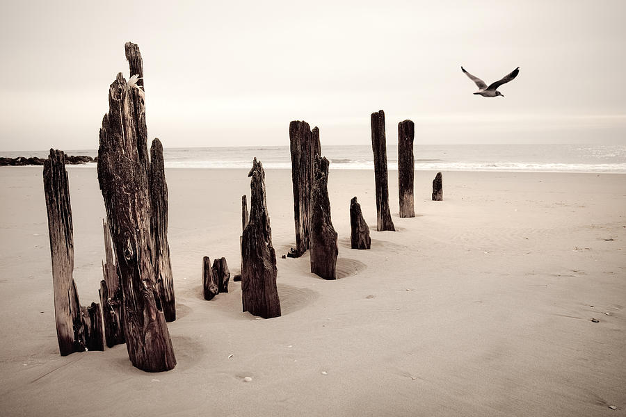 Dreamy Seashore - Seaside Photograph  - Dreamy Seashore - Seaside Fine Art Print