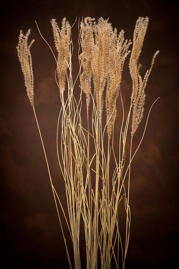 Dried Winter Grasses Photograph  - Dried Winter Grasses Fine Art Print