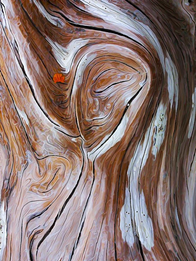 Nature Photograph - Driftwood 6 by Bill Caldwell -        ABeautifulSky Photography