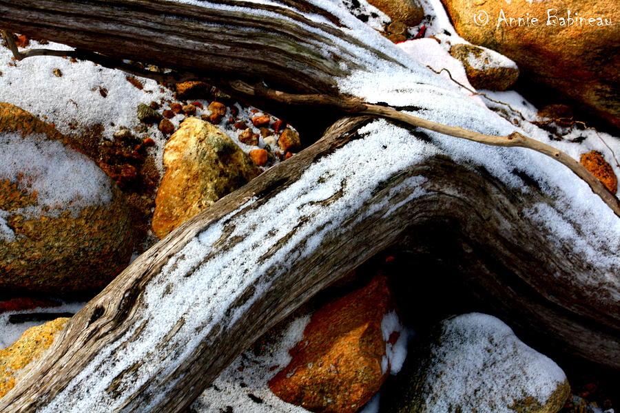 Driftwood Photograph - Driftwood  by Anne Babineau