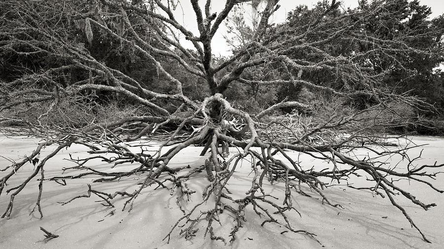 Driftwood Photograph
