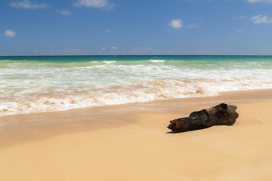 Driftwood Hawaii Beach Park Seascape Photograph - Driftwood by Brian Harig