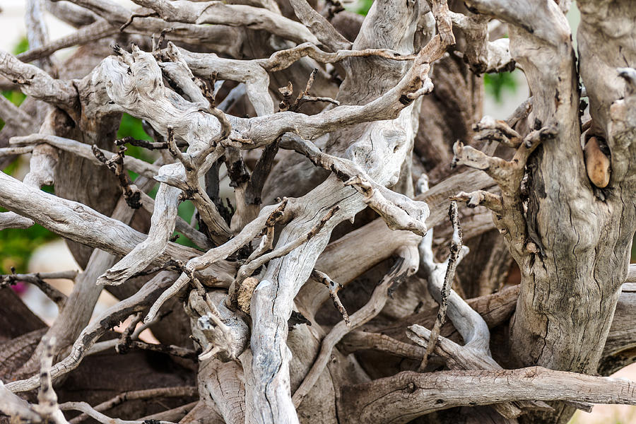 Driftwood Close-up Photograph  - Driftwood Close-up Fine Art Print