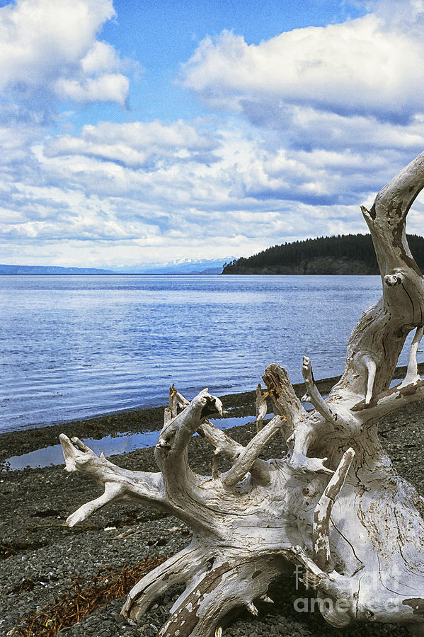 Driftwood On Beach Photograph