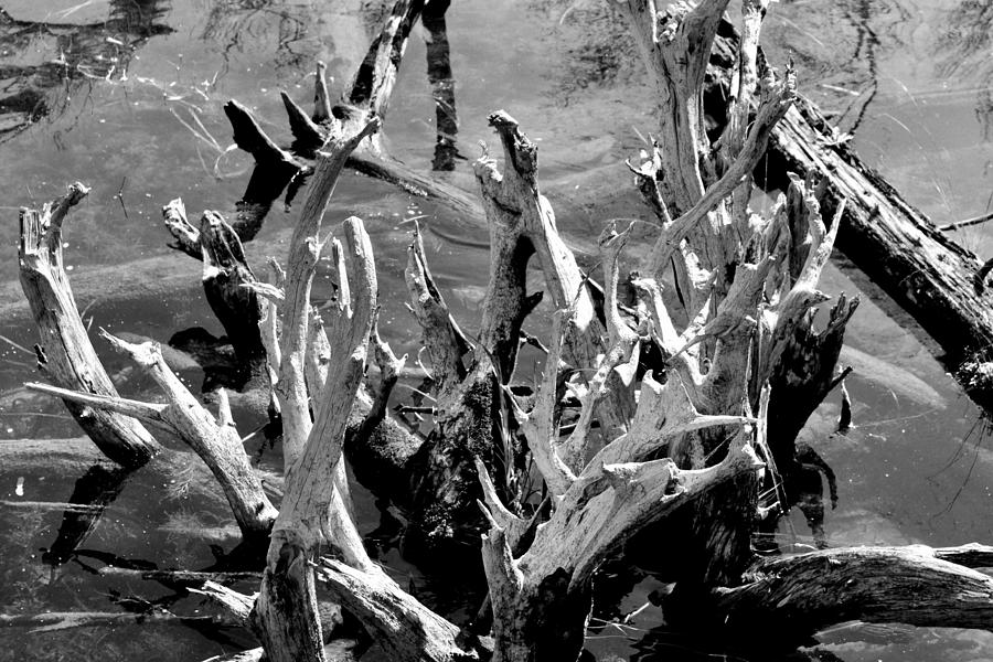 Driftwood On Lost Lake Photograph  - Driftwood On Lost Lake Fine Art Print