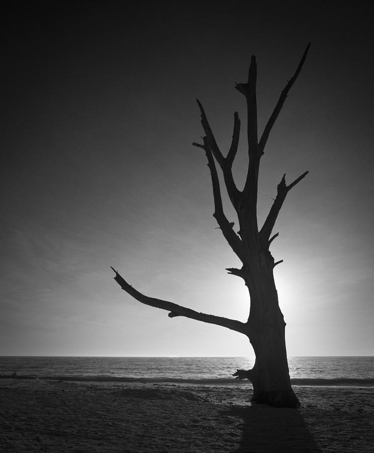 Driftwood Tree On Lovers Key Photograph