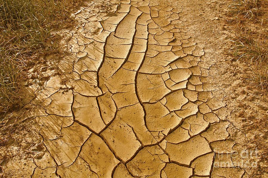 Dry Lands Photograph