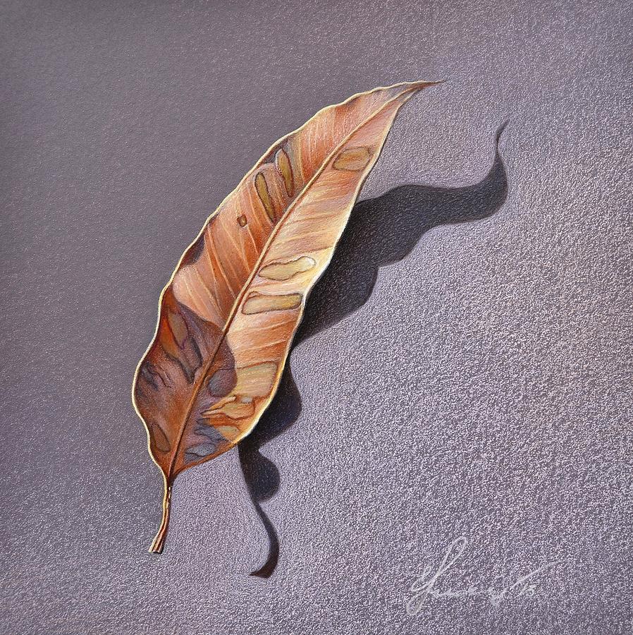 Gum Tree Drawing - Dry Leaf by Elena Kolotusha