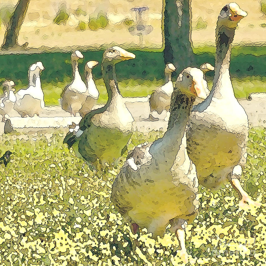 Flock Of Geese Digital Art - Duck Duck Goose by Artist and Photographer Laura Wrede