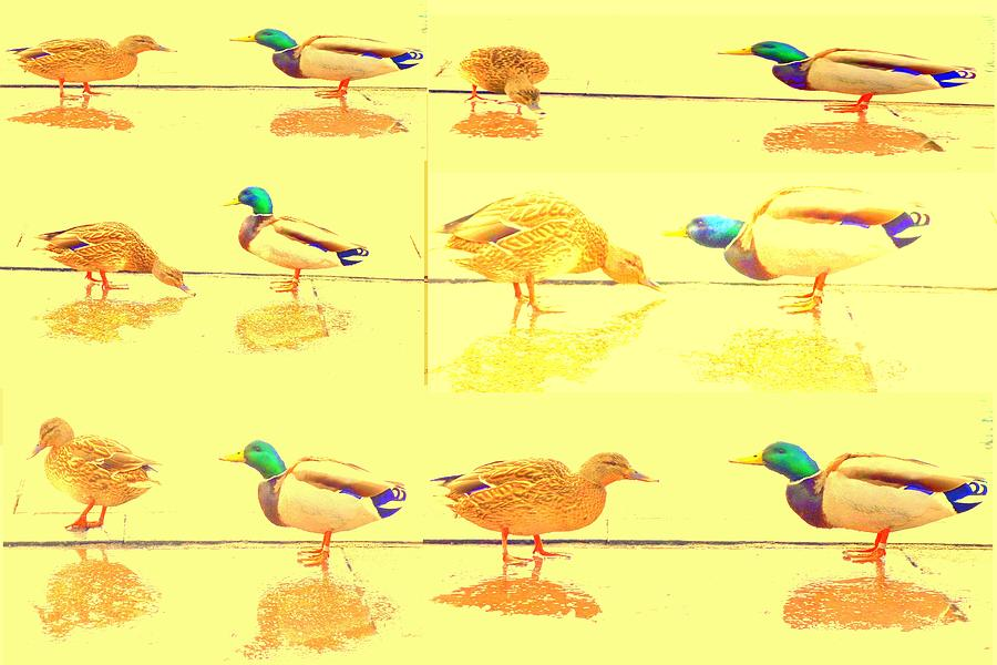 Duck World Photograph  - Duck World Fine Art Print