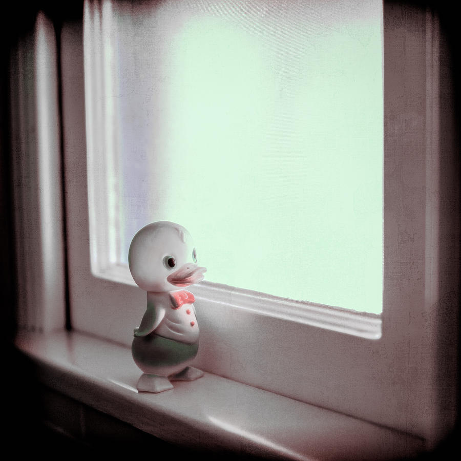 Duckie At The Window Photograph