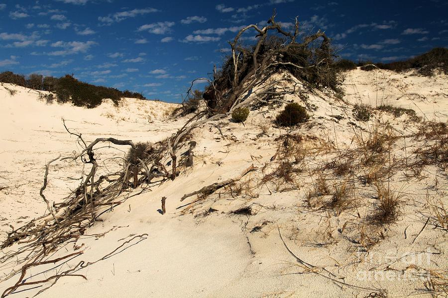 Dune Glue Photograph