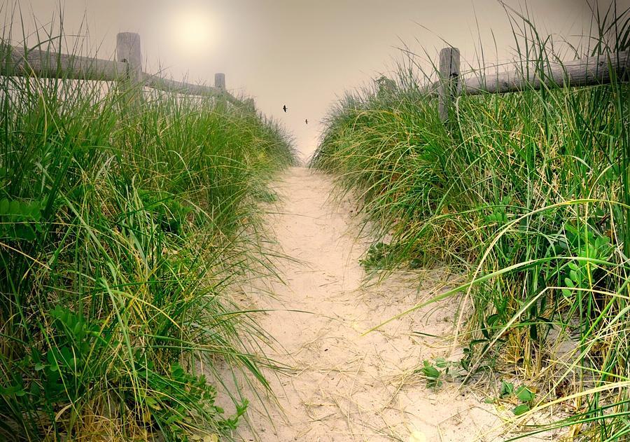 Landscape Photograph - Dunes Catch Light by Diana Angstadt