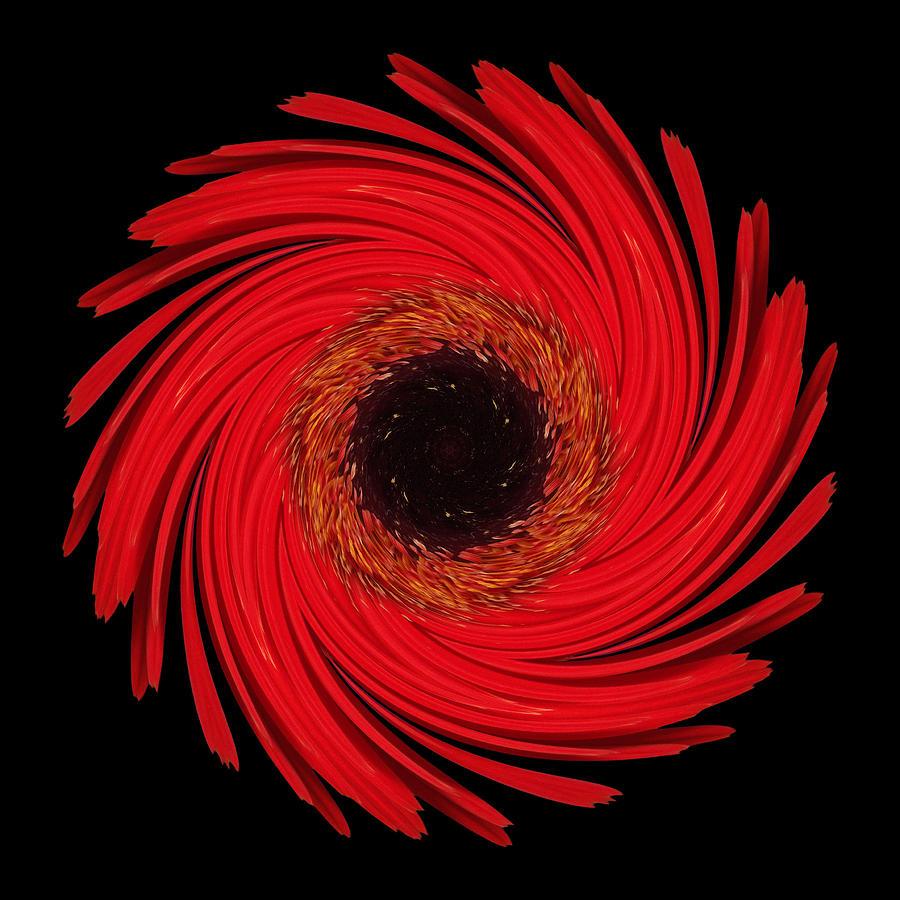 Dying Amaryllis Flower Mandala Photograph