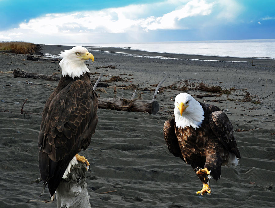 Eagle Determination Photograph