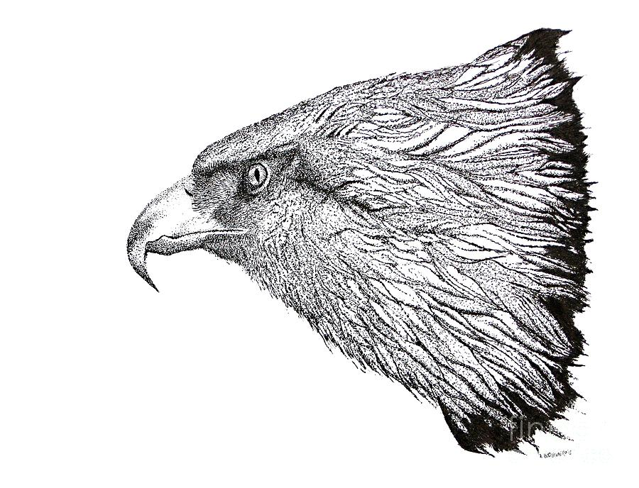 Eagle Head Drawing Drawing
