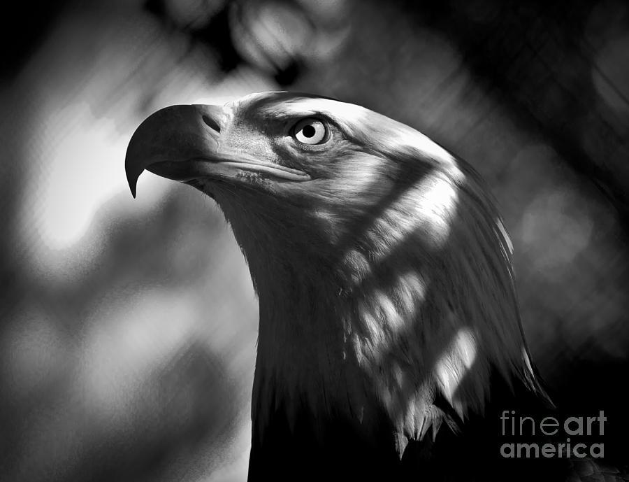 Eagle In Shadows Photograph