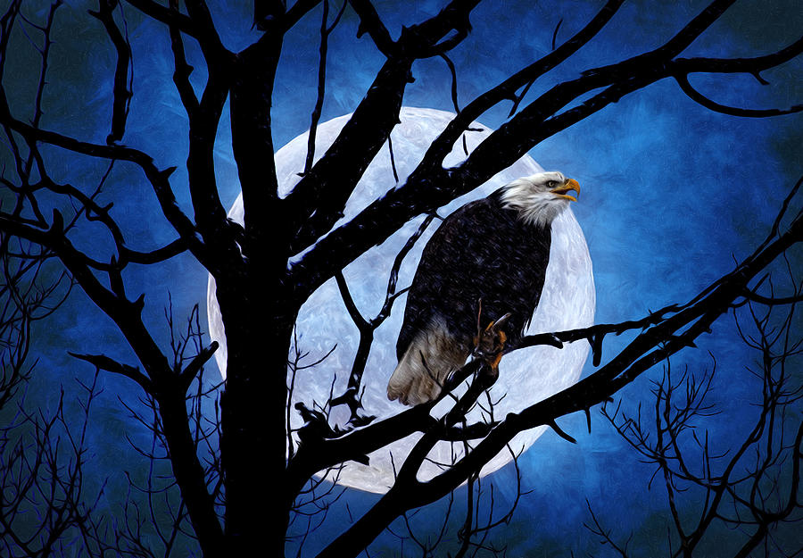 Eagle Night Photograph  - Eagle Night Fine Art Print