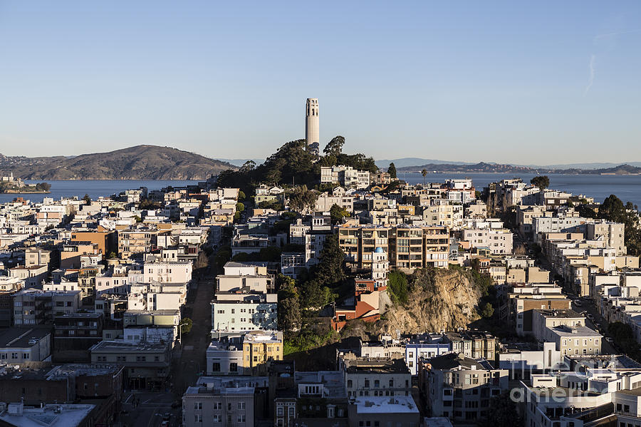 Early Morning Light On Telegraph Hill And Coit Tower Park In San Francisco Photograph  - Early Morning Light On Telegraph Hill And Coit Tower Park In San Francisco Fine Art Print
