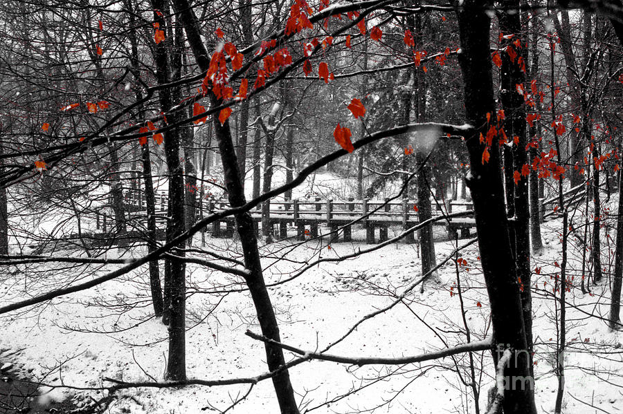 Early Snow Photograph  - Early Snow Fine Art Print