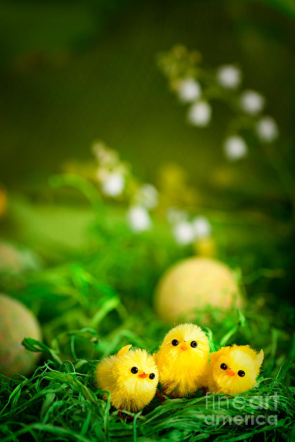 Easter Chicks Digital Art  - Easter Chicks Fine Art Print