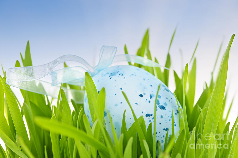 Easter Egg In Grass Photograph  - Easter Egg In Grass Fine Art Print