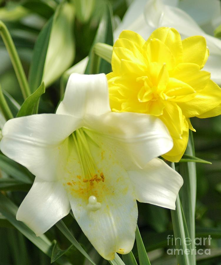 Easter Flowers is a photograph by Kathleen Struckle which was uploaded ...