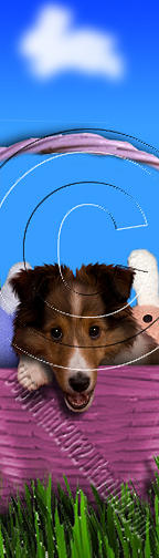 Bookmark Photograph - Easter Sheltie # 460 by Jeanette K