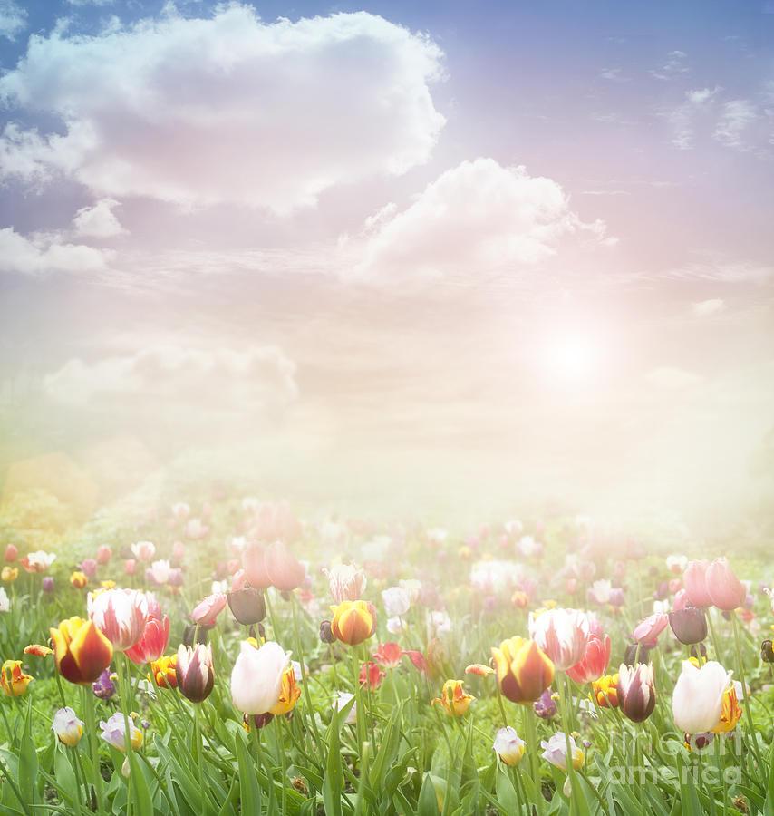 Easter Spring Background Digital Art - Easter Spring Background Fine ...